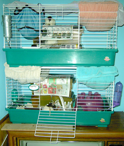 Rat Houses & Cages