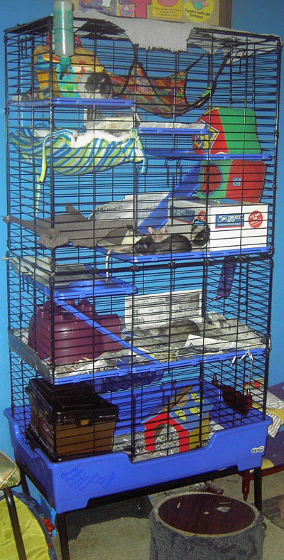 Rat Houses Cages